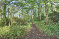 OLD-HALL-WOODS-PANO1