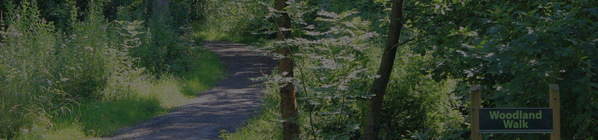 a woodland walk at Old Hall Caravan Park in Lancashire