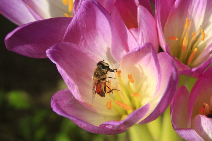 Bee Friendly Tips from Bellamy