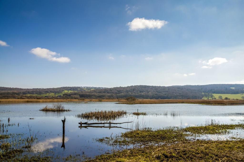 Marshland at Leighton Moss RSPB bird preserve in Lancashire, England on sunny day.