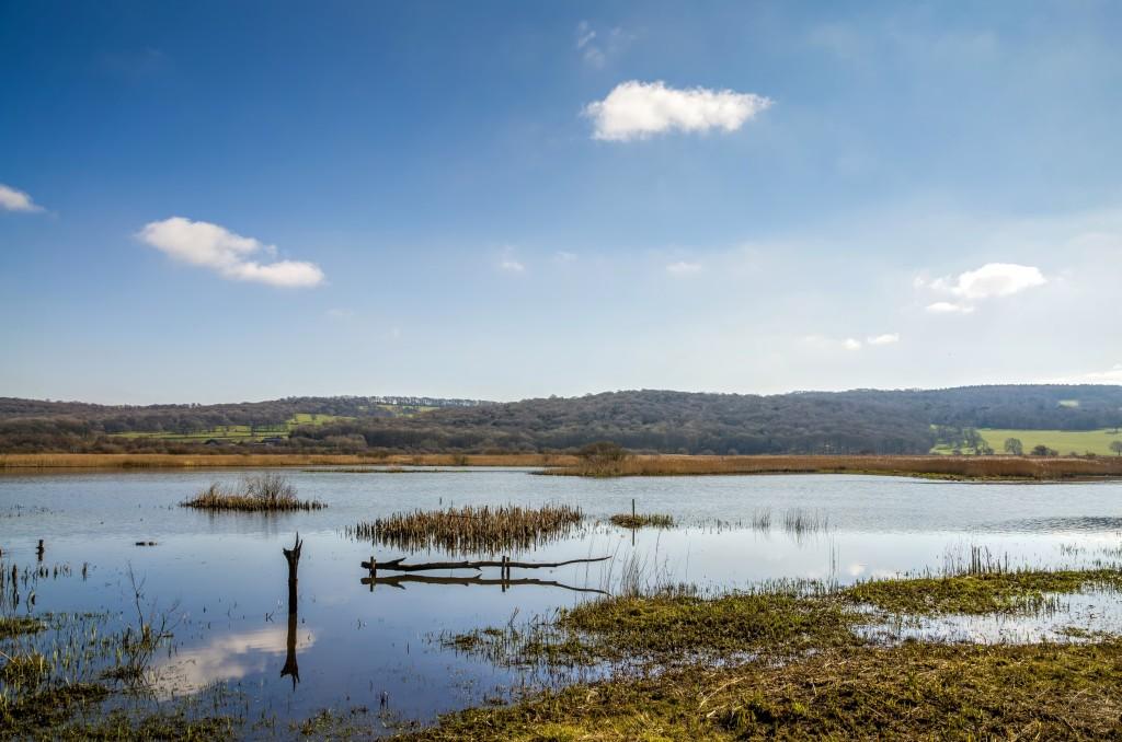 Marshland at Leighton Moss RSPB bird preserve in Lancashire, England on sunny day.