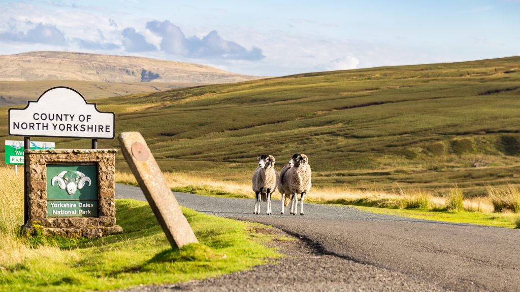 Two sheep as boarder guards to the Yorkshire Dales